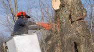 Tree Services and Environmental Management Business For Sale