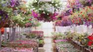 Long Established Nursery Garden Centre Business For Sale