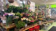 Florist and Gift Shop Business For Sale Yarra Valley