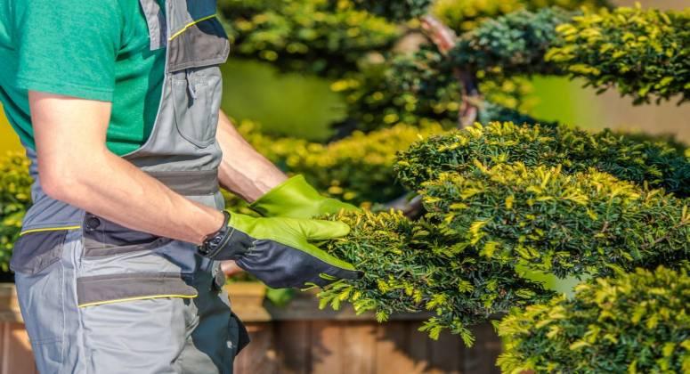 Garden & Maintenance Service Business For Sale